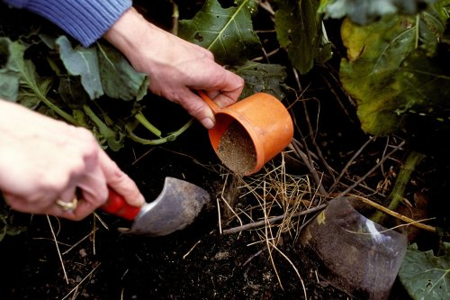 If your vegetable garden isn't thriving, you may need to feed your plants