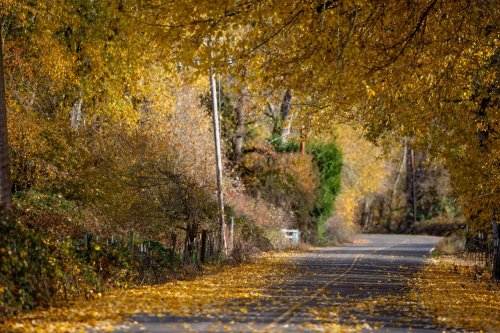 When and where to see fall color in Oregon in 2021