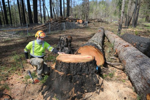 Oregon's post-fire logging is taking trees that may never be hazards, experts say