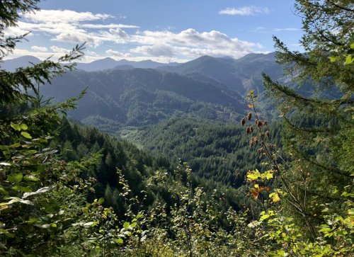 Hike to stunning Coast Range views on a tucked-away trail in the Tillamook State Forest
