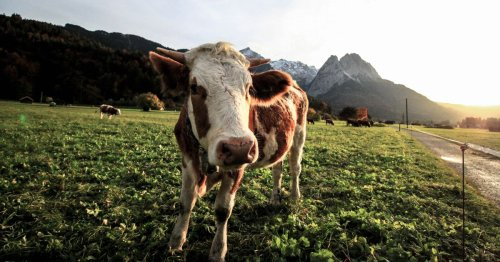 Regenerative Grazing - Increased Production, Biodiversity Resilience, Profits and a Climate Change Solution