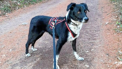 Ängstlicher Hund irrt durch Jena