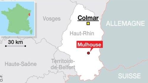 Mulhouse. Un chien risque l'euthanasie après avoir mordu un enfant, une pétition a été lancée
