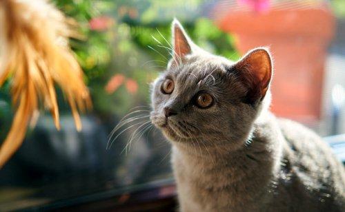 10 signes qui montrent que votre chat est stressé !
