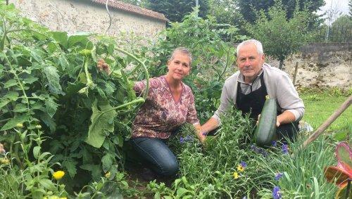 « On a été surpris par leur croissance » : les plantes mellifères séduisent les jardiniers