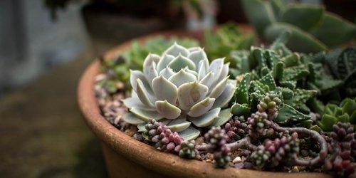 Comment créer les plus belles associations de plantes pour potées ?