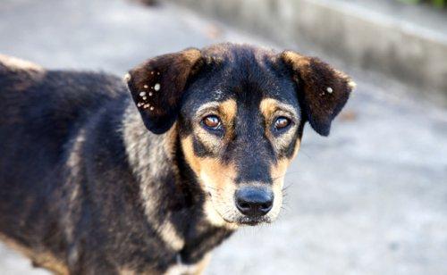Quels sont les parasites externes du chien ? Comment s'en débarrasser ?