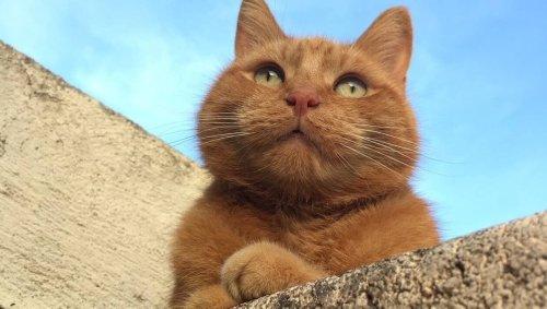 Mais où est donc passé Charlie ? Ils recherchent leur chat, un couple d'Anglais bloqué en Vendée