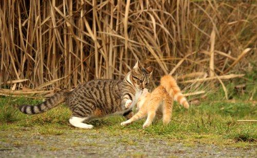 Conflits entre chats : comment gérer ?