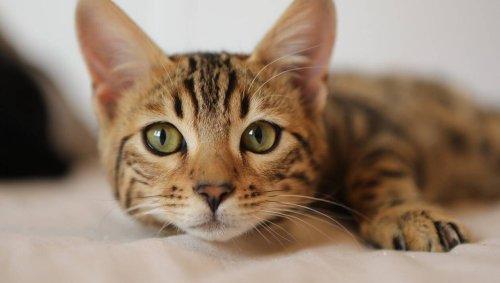 Pas-de-Calais. Une épidémie tue neuf chats dans une SPA, les visites sont suspendues