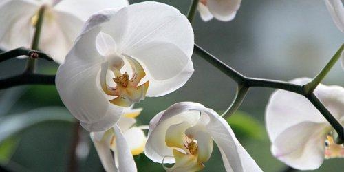 Quelles orchidées peut-on sortir au jardin ?