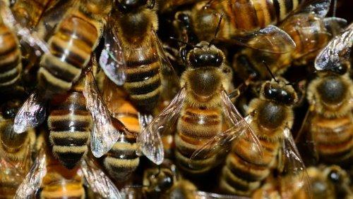 Lot-et-Garonne. Piqué une centaine de fois par des abeilles ou des guêpes, un bûcheron dans un état grave