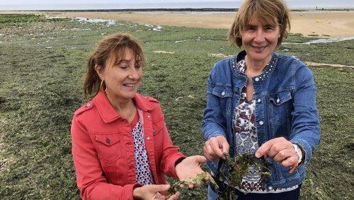 En Normandie, pas de marée verte mais des algues qui pourrissent (les vacances) sur les plages