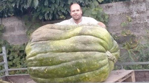 Il fait pousser un potiron géant de 327kg dans son jardin et s'occupe de lui « deuxheures par jour »