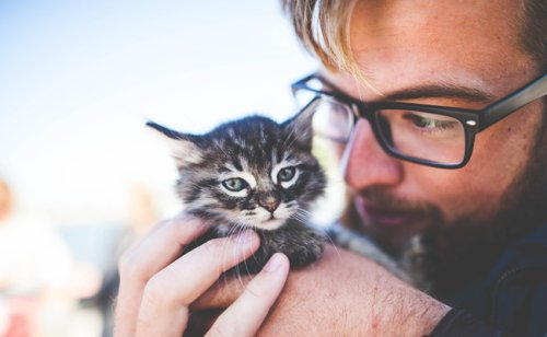 Bienfaits du chat sur l'homme : 8 bonnes raisons d'adopter un chat