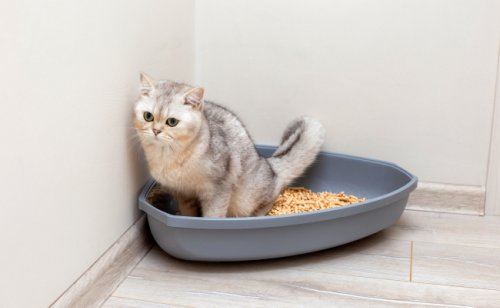 Où jeter la litière du chat ? Est-elle recyclable ?