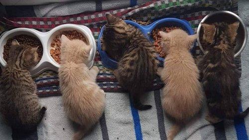 À Caen, 80 chats cherchent d'urgence une famille d'accueil à la SPA