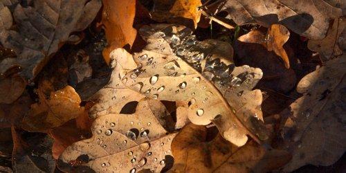 Feuilles mortes d'automne : 4 utilisations astucieuses au jardin