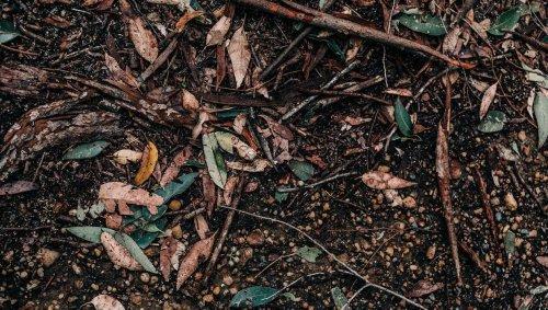 Oise. Le corps d'un homme tué par balle retrouvé enterré dans la forêt d'Ermenonville
