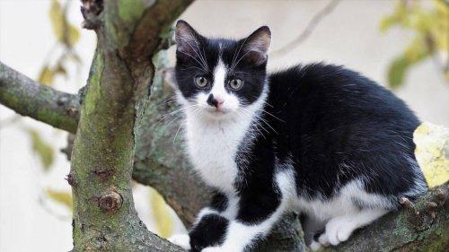 Moselle. Un chat retrouvé mort dans un sac, onze jours après sa disparation à Flétrange