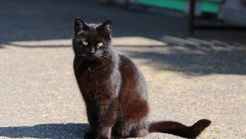 Île de Ré. Une association recense 490 chats en liberté sur l'île et alerte sur la surpopulation