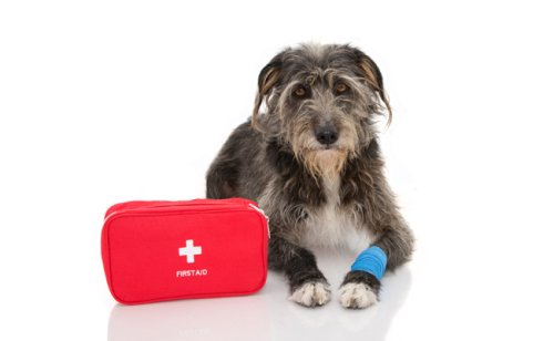 Trousse de secours pour chien : que mettre dedans ?
