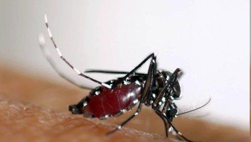 Près de 2 000 cas de dengue par semaine à La Réunion : les hôpitaux demandent de l'aide