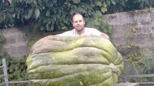 Il fait pousser un potiron géant de 327 kg dans son jardin et s'occupe de lui « deuxheures par jour »