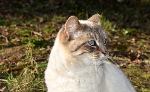 8 signes qui montrent que votre chat est heureux !