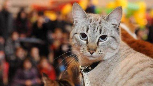Val-d'Oise. Pièges, tirs au plomb… des chats mystérieusement blessés à Vauréal