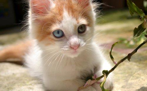 Adopter un chat chez un particulier : quelles précautions ?