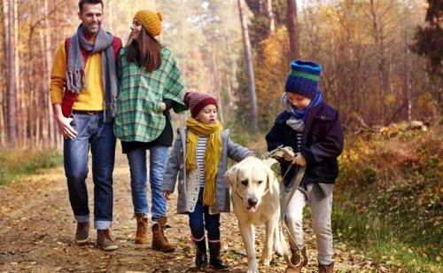 9 bienfaits des animaux de compagnie sur la famille