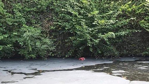Près d'Angers. « Quelqu'un a sans doute vidé un extincteur », pollution à l'étang de la Jaudette
