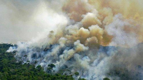 ENTRETIEN. Pourquoi l'Amazonie émet plus de CO2 qu'elle n'en absorbe ?
