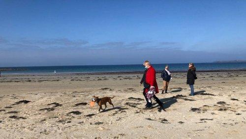 Les chiens à la plage : oui, non, pas du tout, un peu… le sujet fait débat à Saint-Malo
