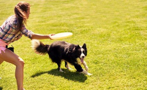 Jouer au frisbee avec son chien : nos conseils