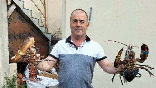 Il sauve deux homards dans un supermarché et les donne à l'aquarium de Noirmoutier