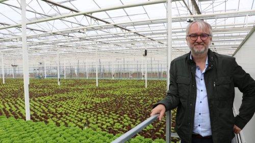 Agriculture. En Belgique, les salades poussent sur des gouttières mobiles