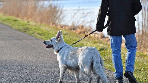 «Ils ne respectent rien!»: le maire d'un village de 700 habitants prend un arrêté anti-crottes de chien