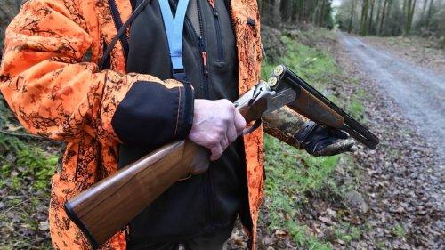 La chasse au tétras lyre, oiseau emblématique des Alpes, est interdite dans les Hautes-Alpes