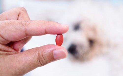 Rendre appétente une prise de médicament pour mon chien : quelles solutions ?