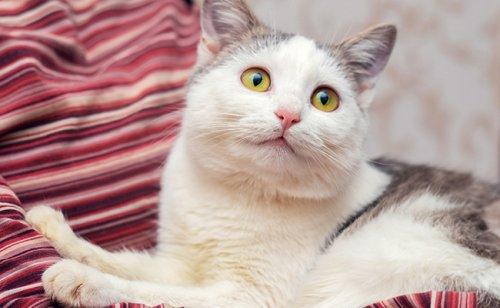 Le patounage du chat : quelle signification ?