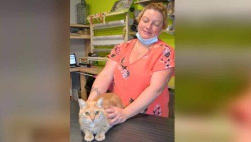 « On croyait qu'il était mort » : sauvé par un routier des Vosges, le chat Ponpon retrouve la Sarthe | Le Maine Libre