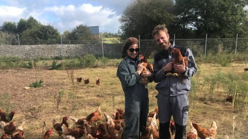 Agriculture. Des poules « retraitées » contre le cancer