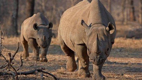 Les marchés financiers au secours des rhinocéros noirs