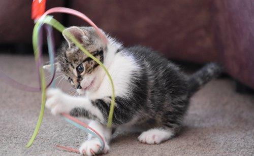 9 jeux d'appartement pour que votre chat ne s'ennuie plus !