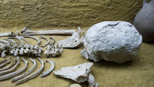 Il déterre des centaines d'ossements humains en creusant une piscine dans son jardin