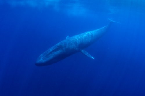 One Cool Thing: Whale Poop+Phytoplankton=Oxygen