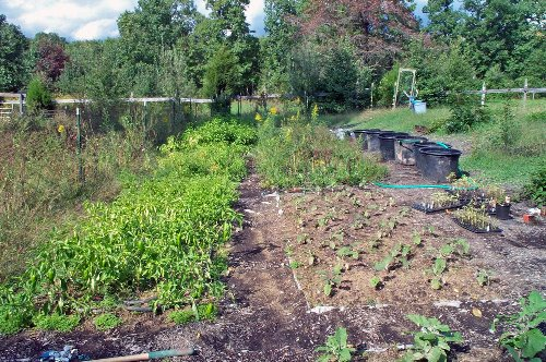Want to Plant the Ultimate Survival Garden This Spring? You Better Start Planning Right Now