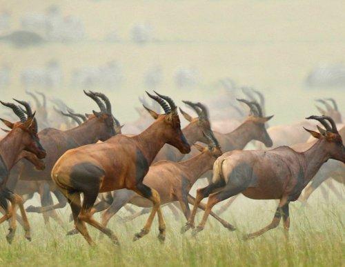 Wonderful World Of Wildlife